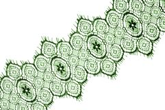 Texture, background, pattern. lace fabric. green. Stunning embroidered flowers bloom on the border along both edges, while. Sporadically grows through the royalty free stock image