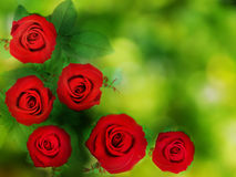 Texture background red roses and green leaf on green bokeh Stock Images