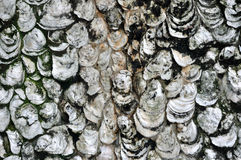 Texture and background of shell Royalty Free Stock Photos