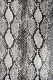 Texture background snake leather Stock Photo
