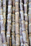 Texture and background of sugarcane Royalty Free Stock Image