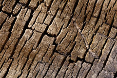 Texture background - tree cracked bark Royalty Free Stock Photos