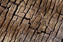Texture background - tree cracked bark Royalty Free Stock Photos