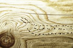 Texture background wooden plank woodworm track Royalty Free Stock Image