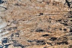 Texture background woody Stock Photos
