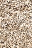 Texture with a bale of straw. Background texture with a bale of straw royalty free stock image