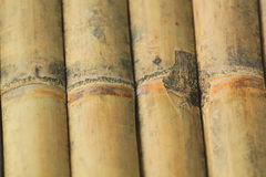 Texture of bamboo Royalty Free Stock Images