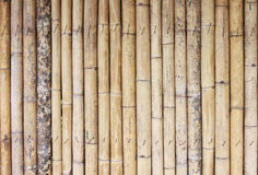 Texture bamboo background Royalty Free Stock Image