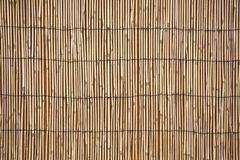 Texture bamboo bright Stock Photo