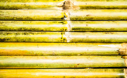 Texture of bamboo fence, nature background Royalty Free Stock Photo