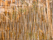 Texture of bamboo. Thin sticks. Dry bamboo. A fence made of bamb Royalty Free Stock Image