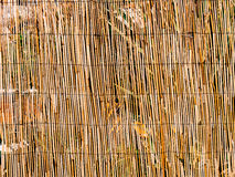Texture of bamboo. Thin sticks. Dry bamboo. A fence made of bamb Stock Photos