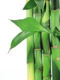 Texture bamboo Royalty Free Stock Photos
