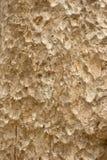 Texture of bark Royalty Free Stock Photo