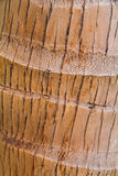 Texture of Bark Coconut Tree. Royalty Free Stock Photography