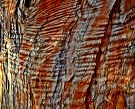Texture. Bark on a juniper tree in Sam Johnson Park - Redmond, OR royalty free stock photography