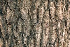 Texture of the bark of an oak tree. Detail of oak tree bark Texture of the bark of an oak tree Stock Image