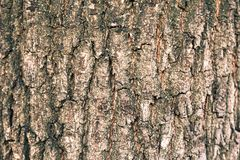 Texture of the bark of an oak tree. Detail of oak tree bark Texture of the bark of an oak tree Stock Images