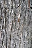 Texture of bark of an old big tree stock photo