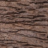 Texture - a bark of an old oak. Wood Tree Background Pattern Royalty Free Stock Photos