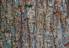Texture - a bark of an old oak. Wood Tree Background Pattern Stock Images