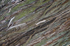 Texture of bark of an old tree Stock Image