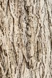 The texture of bark, old tree bark painted with lime, close-up abstract background. Texture of bark, old tree bark painted with lime, close-up abstract stock photos