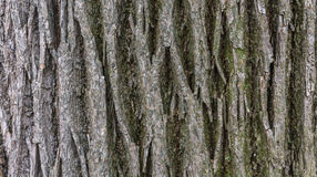 The texture of the bark of the old tree. Stock Photos