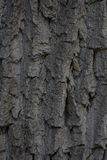 Texture of the bark of an old tree Stock Photography