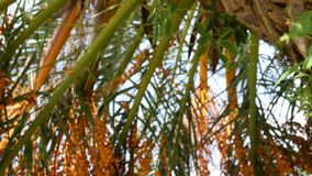 The texture of the bark of palm tree. The texture of the bark of a palm tree stock video