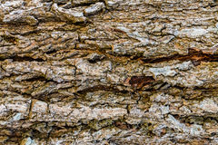 Texture of the bark Stock Images