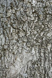 Texture of the bark of spruce. Background of a tree trunk. Royalty Free Stock Photography