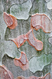 Texture of the bark of a tree. Surface texture of the bark of pine tree Stock Photography