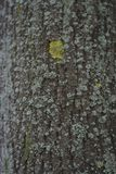 Texture of a bark of a tree, background stock photography