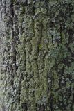 Texture of a bark of a tree, background stock photo