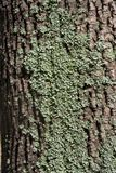 Texture of a bark of a tree, background royalty free stock images