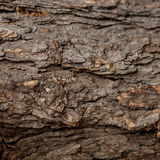 Texture of the bark of a tree. Front view of tree bark Stock Photos