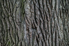 Texture of the bark of a tree. Stock Images