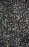 Texture of a bark of a tree, background stock images