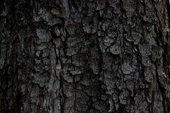 Dark bark of a tree royalty free stock photos