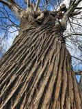 Texture - Bark of a tree Stock Photos