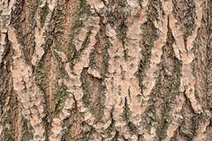 The texture of the bark of a tree trunk royalty free stock images