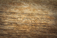 Texture of bark wood Royalty Free Stock Image