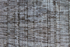 Texture of bark wood Stock Images
