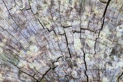 Texture of bark wood Stock Photography