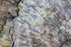 Texture of bark wood Royalty Free Stock Photo