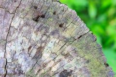 Texture of bark wood Royalty Free Stock Photos