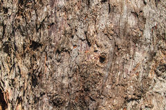 Texture of bark wood Stock Photos