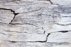 texture of bark wood use as natural background, surface eroded b Royalty Free Stock Image