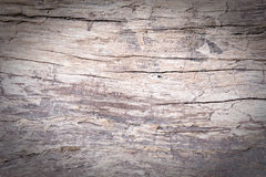 texture of bark wood use as natural background, surface eroded b Royalty Free Stock Images